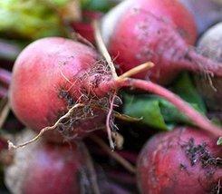 200 Seeds - Early Wonder/Beta vulgaris beet - $53.46