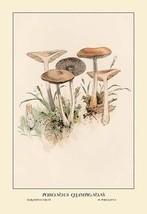 Poisonous Champignous by W. Hamilton Gibson - Art Print - $19.99+