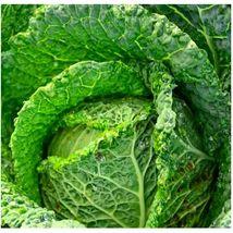 4 Variety Seeds - Savoy Perfection Cabbage Seeds #IMA41 - $12.99+