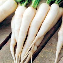 White icicle radish seeds   100 seeds non gmo1 thumb200