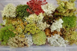 Fresh live moss variety pack thumb200