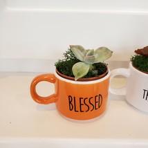 Succulents in Espresso Mug Planters, Set of 3, ceramic Thankful Grateful Blessed image 3