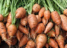 Royal Chantenay Carrot French Heirloom Non-GMO Root Vegetable Garden Seeds - $8.43