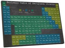 "Pingo World 0718QN4VCDM ""Periodic Table of Marijuana"" Gallery Wrapped Canvas Art - $54.40"