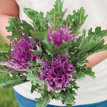 Crane Feather Queen Red (F1) Ornamental Kale  Flower Seeds - $8.99