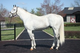 """COLOR PHOTO - UNBRIDLED""""S SONG confirmation shot - $8.00+"""
