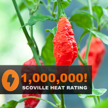 USA Grown 25-Seeds-Red-Ghost-Pepper-Bhut-Jolokia-EXTREME-HOT-Chili-Heirl... - $2.38