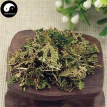 Di Bai Zhi, Herba Selaginellae Moellendorfii, Moellendorf's Spidemoss Herb 500g - $34.99