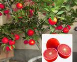 Cc016856 3c62 4bb6 8df5 283bd7f6e404 thumb155 crop