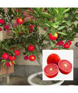 Egrow 20 Pcs/Pack Red Color Lemon Seeds Drawf Tree Bonsai Organic Fruit ... - $5.92