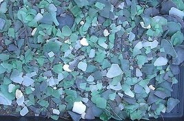 Great lakes 6 oz surf tumbled Sea Glass large pieces green assorted clea... - $9.98