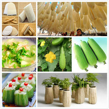 20 Big Loofah Sponge Gourd Seeds of Vegetables Luffa fibrous Showy Plant... - $2.16