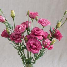 Arena III Red Pelleted (F1) Lisianthus Seed Flower Seeds Annual Flower Seeds - $8.99