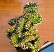 Hot Sale!10 Seed/Lot mini cactus seed (Astrophytum) succulents plants se... - $3.99