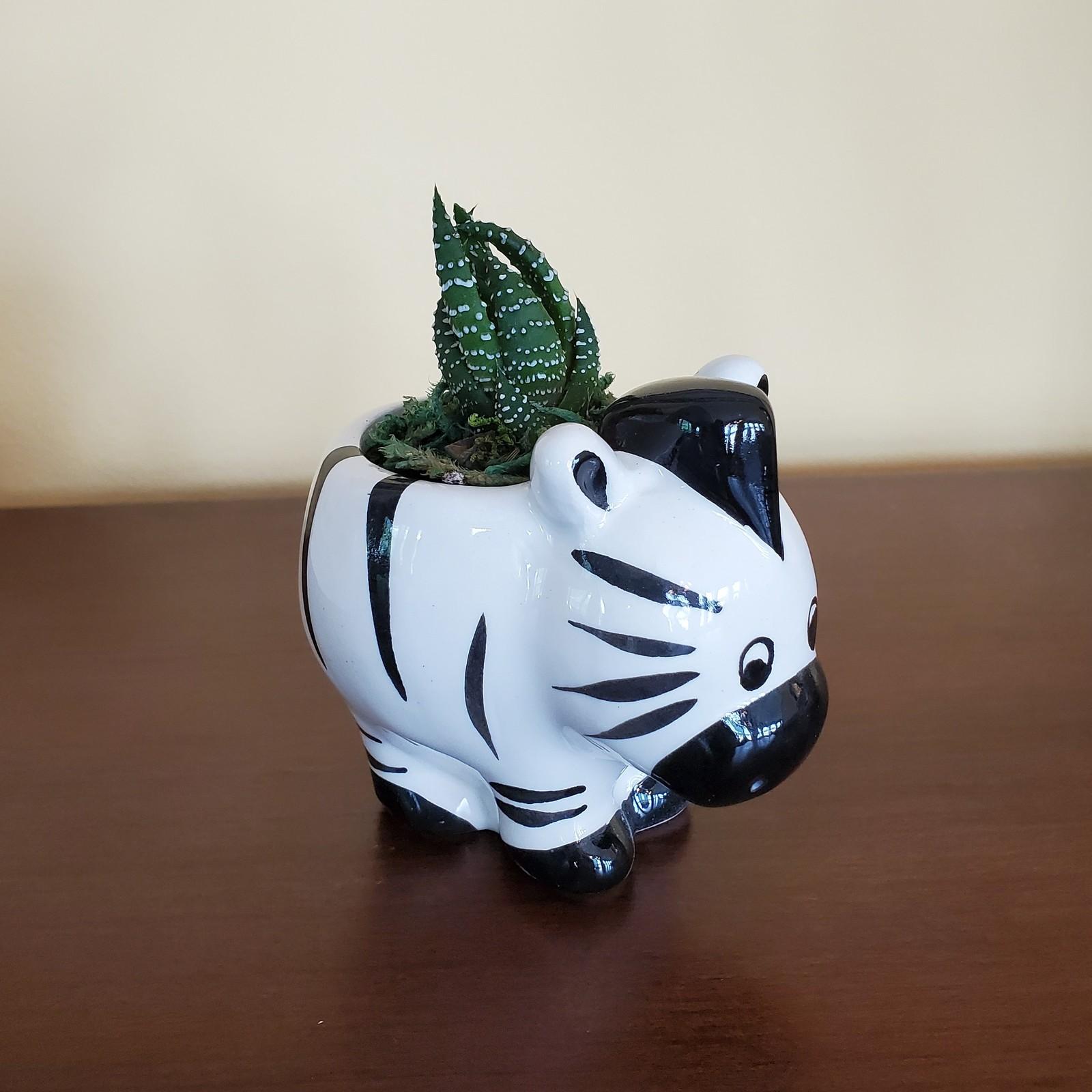 Zebra zebra 1