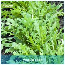 100 Arugula Seed Organic Vegetable Seeds Supernatural Products Seeds - $4.57