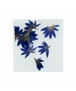 Elegant  Real  DRIED FLOWERS  BLUE   # H - $4.80