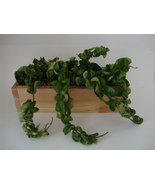 Hoya Hindu Rope Wall Garden - Mount or Sit - Cedar Wood Planter - Gift, ... - $60.00