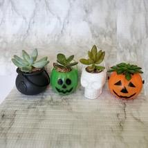 Live Succulent in Mini Halloween Planter, Pumpkin Jack O'Lantern Skull Cauldron image 1