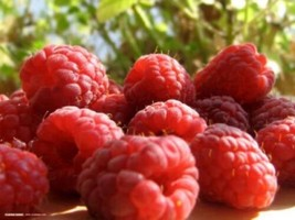 SHIPPED FROM US 200 Red Raspberry Rubus Idaeus Bush Fruit Seeds, LC03 - $19.00