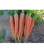 Bulk Organic Carrot Seeds Scarlet Nantes (1 Lb) - $16.78