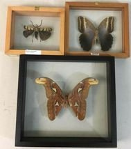 Insect Entomology Lot Collection 36pc Specimen Scorpion Lantern Fly Beetle image 4