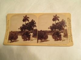 Cuba Cuban Farmer Carring Grass to Market Province Havana Stereoview Card - $14.99