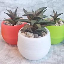 Haworthia Tessellata Succulent in Planter, Colorful Self-Watering Pot image 4