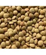 Brown Lentil Bean Sprouting Seeds - Bag of 300 seeds - $1.99