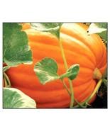 Delicious Big Max Pumpkin Fresh Seeds 3 Variety #IMA41 - $17.99+