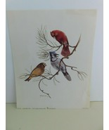 Vintage Paper Litho Art Print A Welcome Trio by Harry J Moeller 1969 No.732 - $16.75