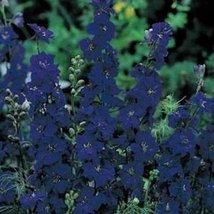 Delphinium / Larkspur Consolida- Blue Spire- 50 Seeds - $1.29