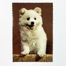 Samoyed Dog Vintage Hallmark Postcard - $6.44