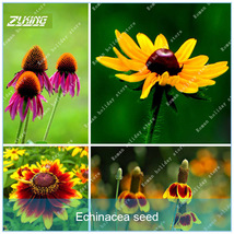 100 Echinacea Seed Flower Seeds Bonsai Plants For Home Garden - $5.02