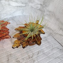Live Air Plants in Glass Leaf Holders, set of 2 Airplant Pots, Fall Plant image 5