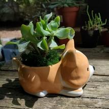 "Corgi Dog Planter with Ripple Jade Succulent, ceramic 5"" Puppy image 3"