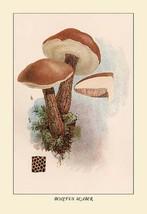 Boletus Scaber by W. Hamilton Gibson - Art Print - $19.99+