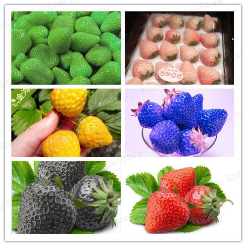300Seeds Strawberry Seeds, 50 Seeds/ 6 Types Home Fruti Garden TastY & Healthy