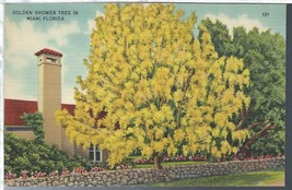 Miami Florida FL Golden Shower Tree Postcard Linen Colourpicture - $3.34