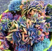100pcs Japanese Succulents Seeds Rare Indoor Flower Mini Cactus Seeds - $20.94