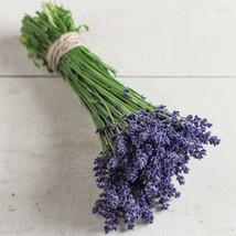 Ellagance Purple Lavender Flower Seeds - $8.99