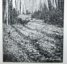 Original Black White Photography Giclee Print Autumn Linda Pampinella Co... - $99.99