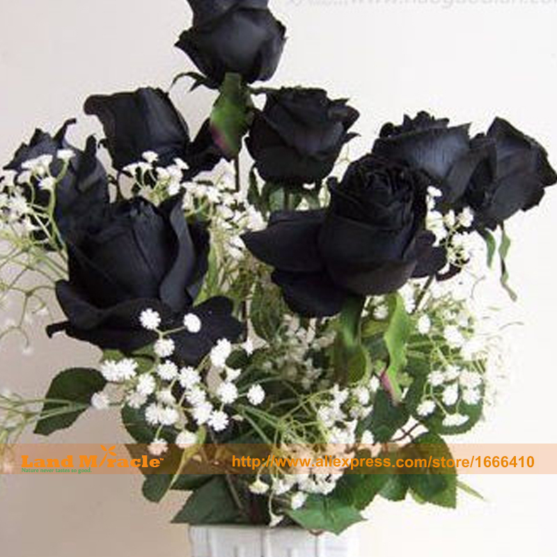 50 Seeds/Pack, Very Popular Rose Seeds,Bonsai 'YUN NAN' Rosaceae Black Rose