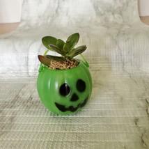 Live Succulent in Mini Halloween Planter, Pumpkin Jack O'Lantern Skull Cauldron image 9