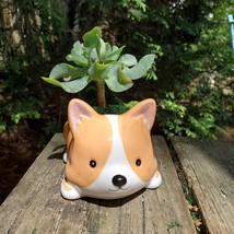 "Corgi Dog Planter with Ripple Jade Succulent, ceramic 5"" Puppy"