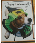 BRAND NEW IN PACKAGE Momentum Brand Pet Scary Witch Costume,  CUTE & SIMPLE - $4.94
