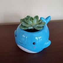 "Happy Whale Planter with Live Succulent, 6"" Blue Ceramic Animal Pot, Echeveria image 4"