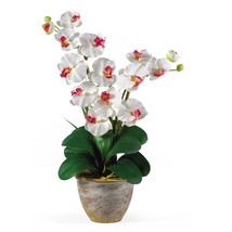 Double Stem Phalaenopsis Silk Orchid Arrangement - $51.41
