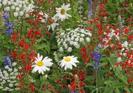 9 Variety Beautiful Fresh Seeds Patriot Red White Blue Wildflower Seed M... - $13.50+
