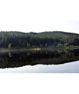 Scottish Highland Scenic A3 Print - Highland Forest View - $50.00